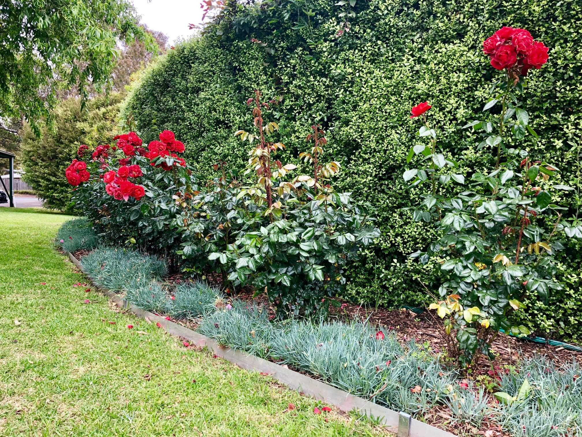 Affordable garden edging